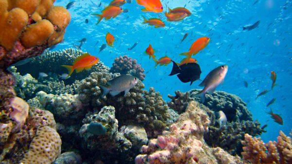Fishery Business Plan